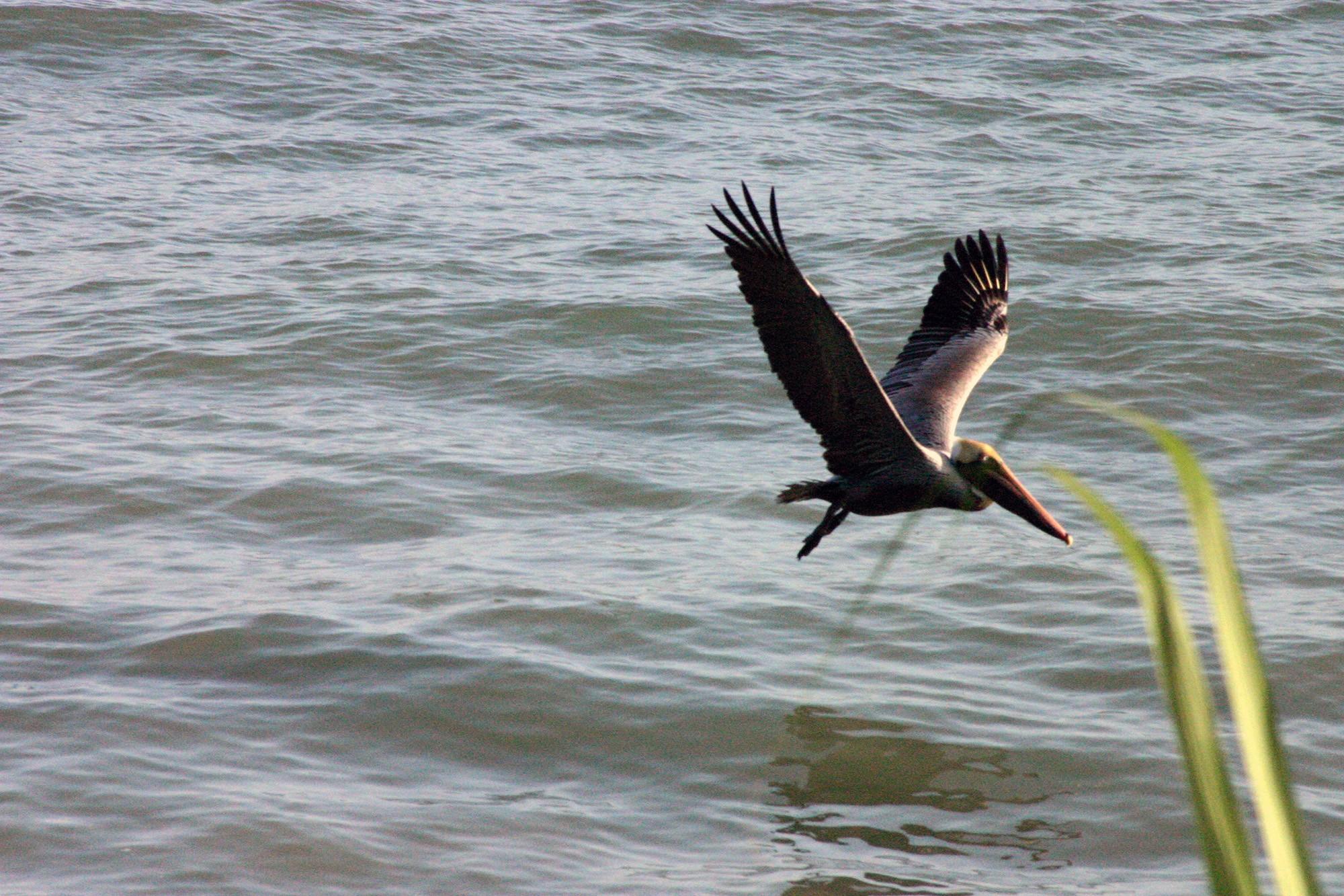 AL NATURAL resort pelican